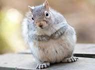 可爱小动物仓鼠高清图片