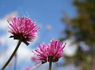 春暖花开唯美意境摄影壁纸