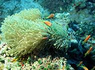 海底世界珊瑚风景图片壁纸