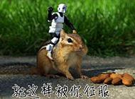 搞笑动物精美插图推荐