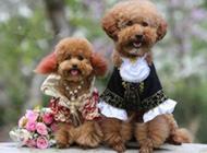 狗狗的幸福浪漫婚礼组图