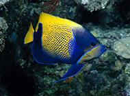 栖息于海底的鱼类动物图片