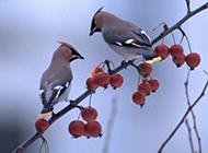 飞上枝头的小鸟高清壁纸
