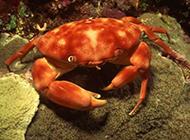 海洋世界里那些千奇百怪的海洋生物