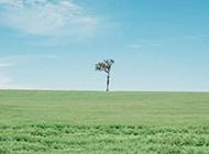 蓝天白云草地素材绿意盎然