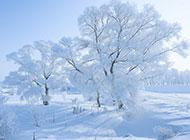 冬天森林白色雪景图片唯美洁净