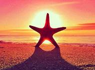 可爱漂亮的海星唯美图片