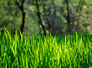 绿色草原风景壁纸清新唯美
