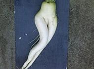 邪恶内涵图:蔬菜也有内涵的一刻