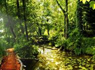 风景图片森林四季优美壁纸