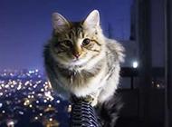 神气十足的猫咪高清桌面壁纸