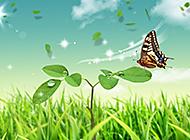 电脑设计清新自然风景高清壁纸