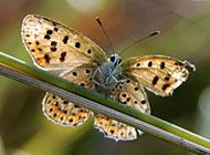 高清蝴蝶摄影图片欣赏