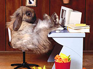 调皮可爱的小兔子高清图片