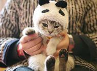 可爱猫咪居家呆萌生活照
