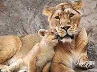 动物之间亲密瞬间图片欣赏