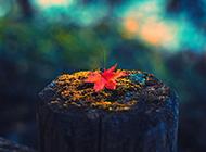 清新淡雅大自然风景图片壁纸