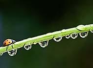 树叶上晶莹剔透的水滴高清图片