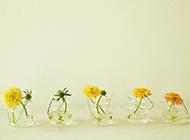 小清新唯美鲜花盆栽风景图片
