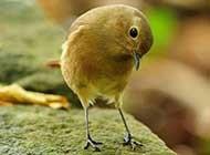 炫丽色彩的各种可爱动物