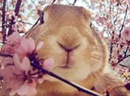 微博网红史大力小兔子图片