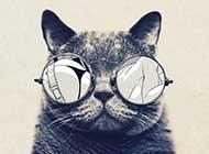 可爱的小黑猫卖萌高清图片
