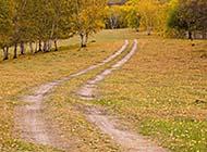 秋天黄绿色的大自然美景高清图片
