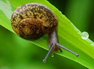 雨后爬行的蜗牛图片大全