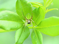 常见昆虫蜘蛛图片微距特写