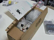 动物爆笑图之包邮的猫咪