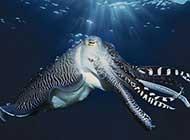 海洋奇妙生物唯美高清图集