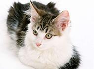 小猫咪高清动物图片合集