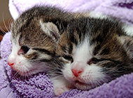 猫咪抱抱萌萌哒的图片