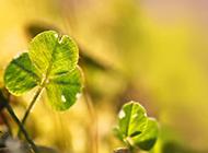 唯美意境植物风景壁纸