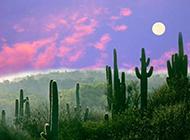 迷人的高原夜景图片赏析