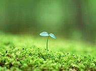 绿色护眼植物微距风景壁纸