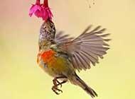 色彩斑斓的太阳鸟唯美高清图片