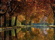优美大自然风景森林河流壁纸