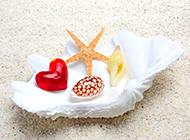 海边贝壳风景唯美图片欣赏