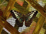悠闲栖息的花蝴蝶图片