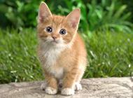 超有爱的猫咪写真高清壁纸