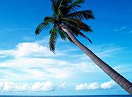 马尔代夫海洋沙滩风景图片
