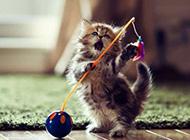 超萌可爱的猫咪宝贝图片