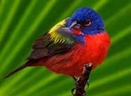 叫声清脆的小鸟高清桌面壁纸