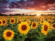 美丽大自然花卉景观高清壁纸