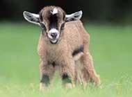 世界各地萌萌哒的萌羊羊