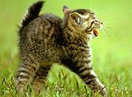 可爱小奶猫草地飞奔萌萌美图集