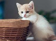 自娱自乐的萌猫咪组图