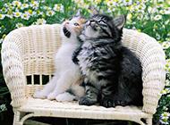 可爱小奶猫呆萌精美抓拍高清图集