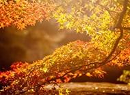 唯美秋天的红叶高清风景壁纸